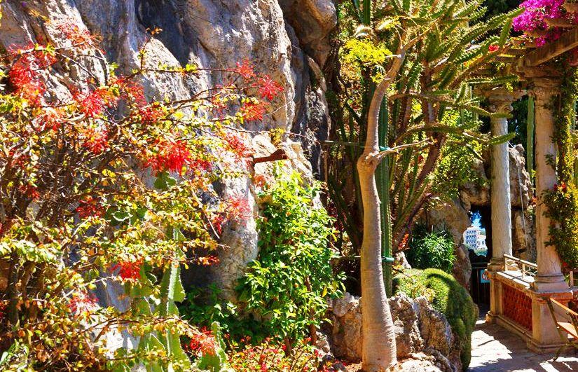 экзотические сады Жалоне де Монако